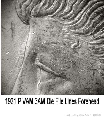1921-P VAM-3AM Lines Forehead.jpg